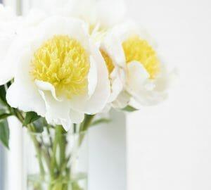 Yellow & White Flowers